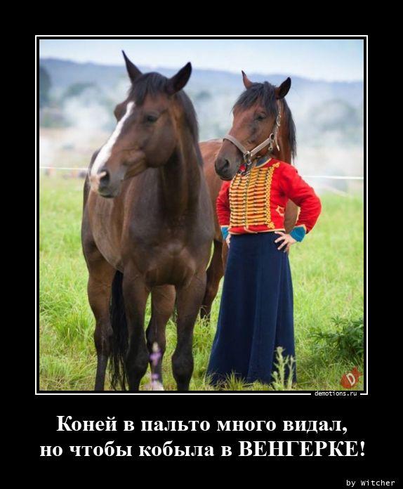 Коней в пальто много видал, но чтобы кобыла в ВЕНГЕРКЕ!