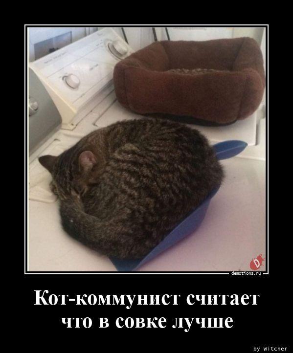 Кот-коммунист считает что в совке лучше