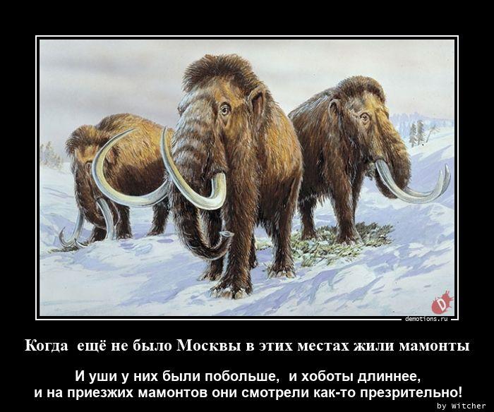 Когда  ещё не было Москвы в этих местах жили мамонты