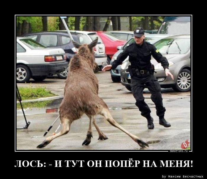ЛОСЬ: - И ТУТ ОН ПОПЁР НА МЕНЯ!