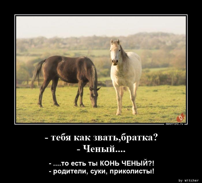 - тебя как звать,братка? - Ченый....