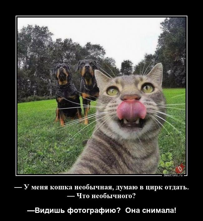 — У меня кошка необычная, думаю в цирк отдать. — Что необычного?