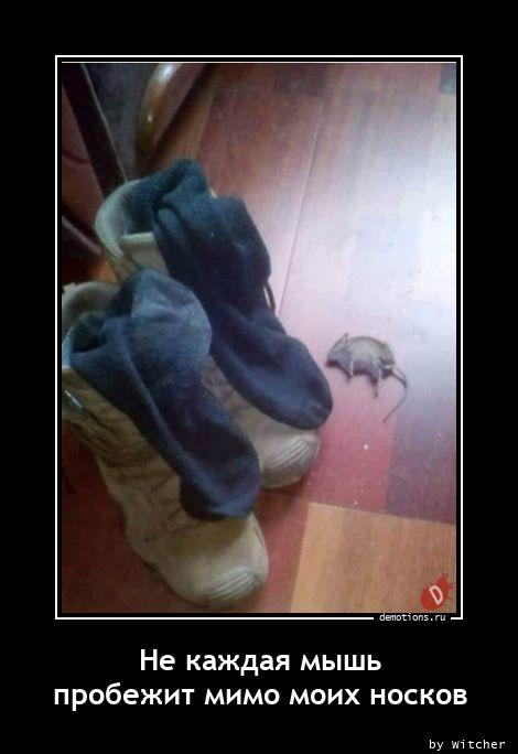 Не каждая мышь пробежит мимо моих носков