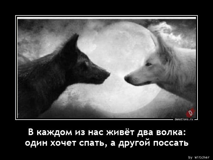 В каждом из нас живёт два волка: один хочет спать, а другой поссать