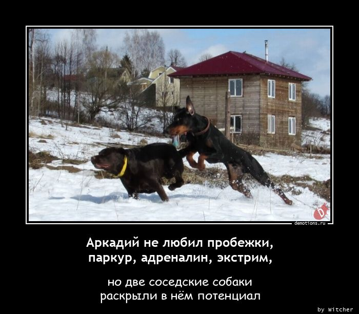 Аркадий не любил пробежки, паркур, адреналин, экстрим,