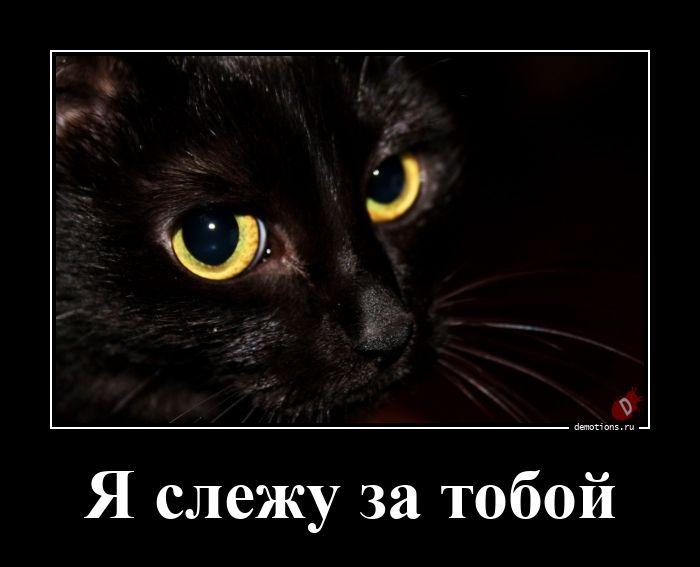 Я слежу за тобой