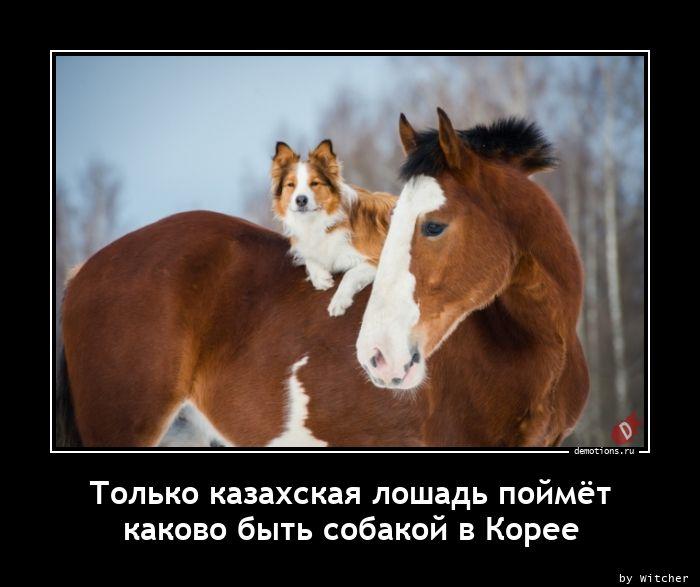 Только казахская лошадь поймётnкаково быть собакой в Корее