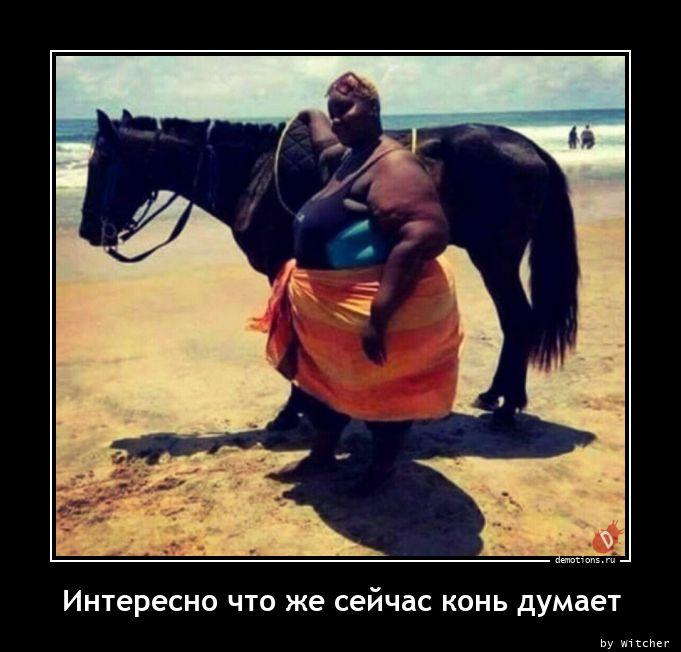 Интересно что же сейчас конь думает