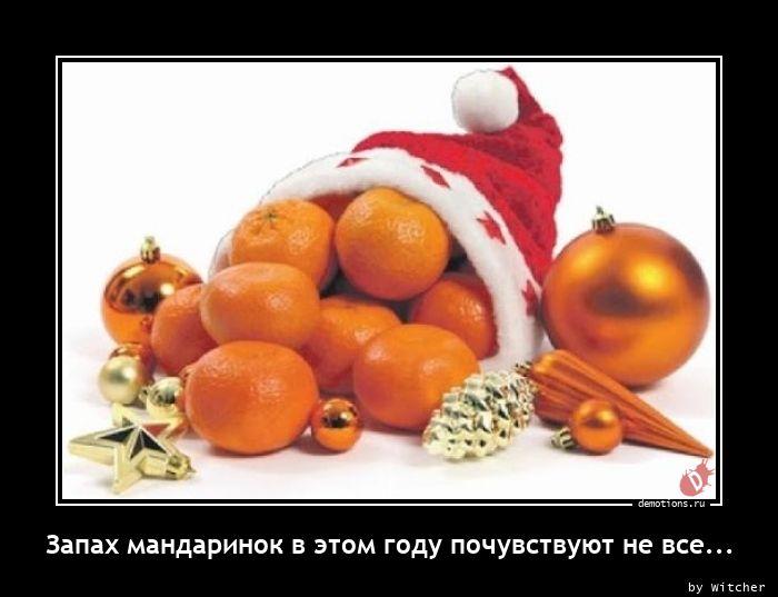 Запах мандаринок в этом году почувствуют не все...