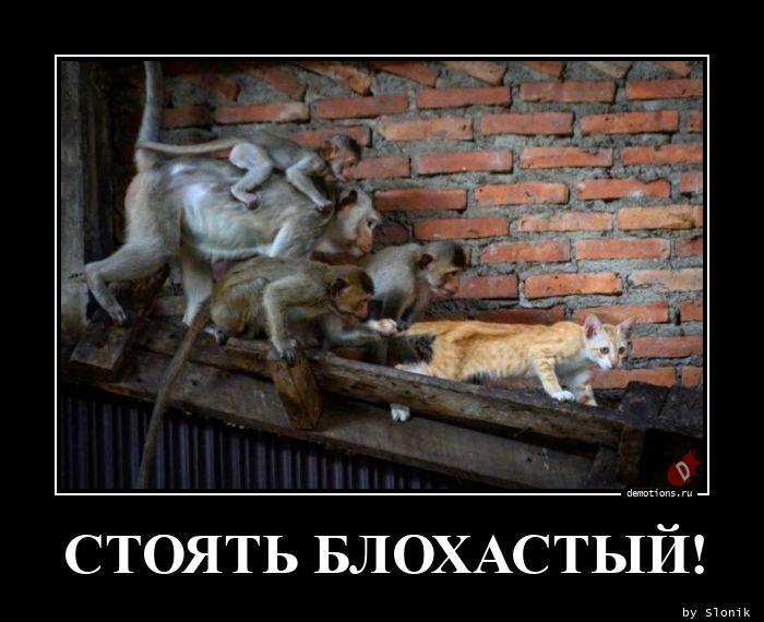 СТОЯТЬ БЛОХАСТЫЙ!