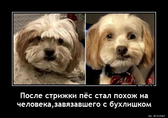 После стрижки пёс стал похож на человека,завязавшего с бухлишком