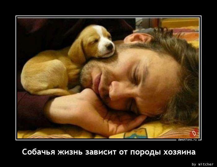 Собачья жизнь зависит от породы хозяина