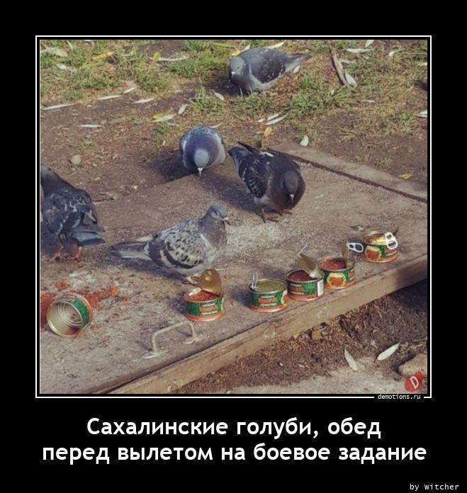 Сахалинские голуби, обед  перед вылетом на боевое задание