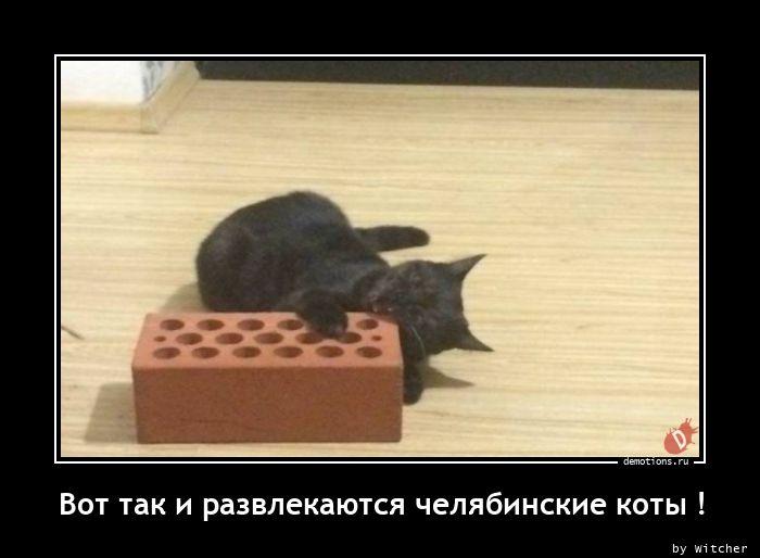 Вот так и развлекаются челябинские коты !