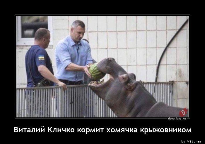 Виталий Кличко кормит хомячка крыжовником
