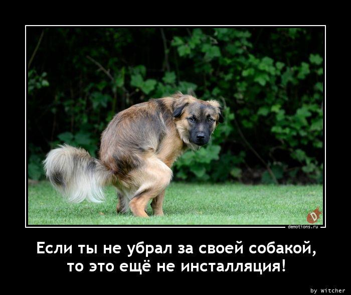 Если ты не убрал за своей собакой, то это ещё не инсталляция!