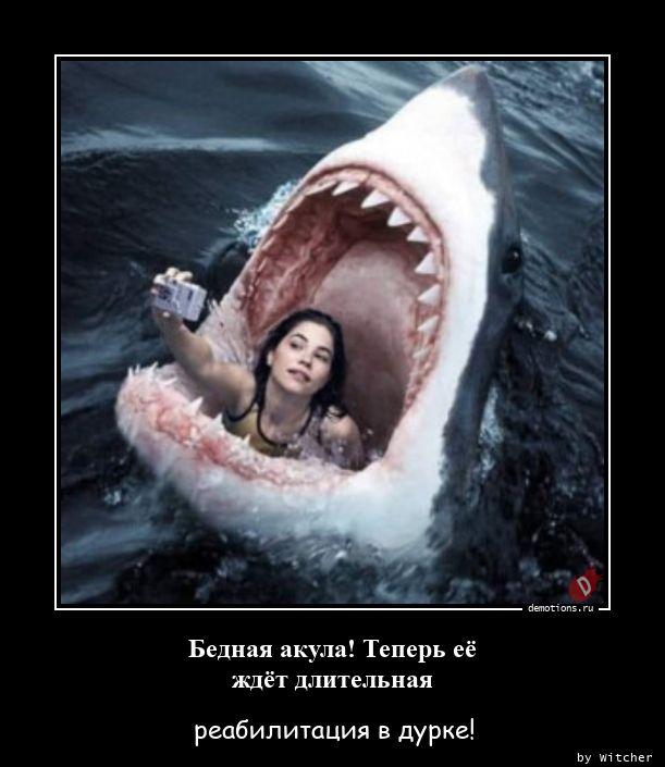 Бедная акула! Теперь её ждёт длительная