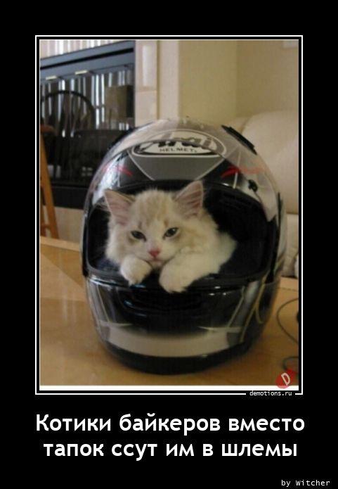 Котики байкеров вместо тапок ссут им в шлемы