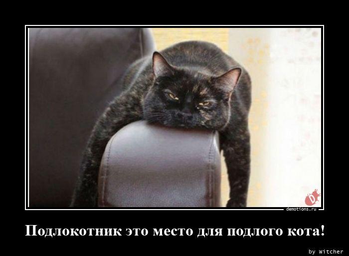 Подлокотник это место для подлого кота!