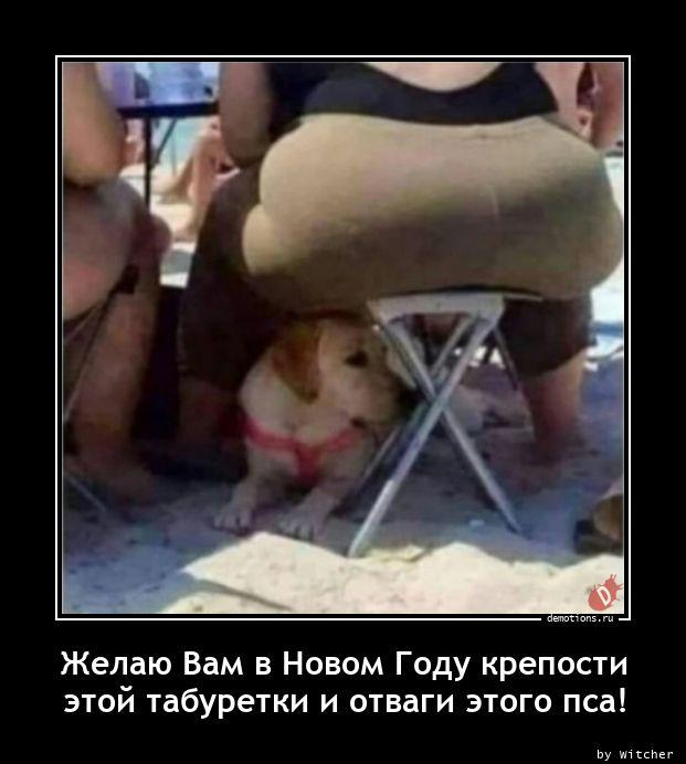 Желаю Вам в Новом Году крепости  этой табуретки и отваги этого пса!