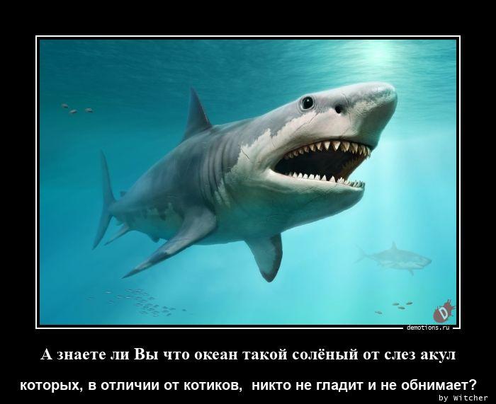 А знаете ли Вы что океан такой солёный от слез акул
