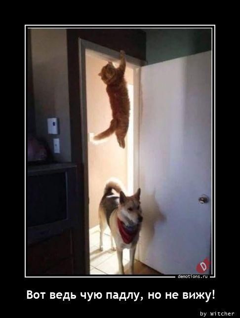 Вот ведь чую падлу, но не вижу!