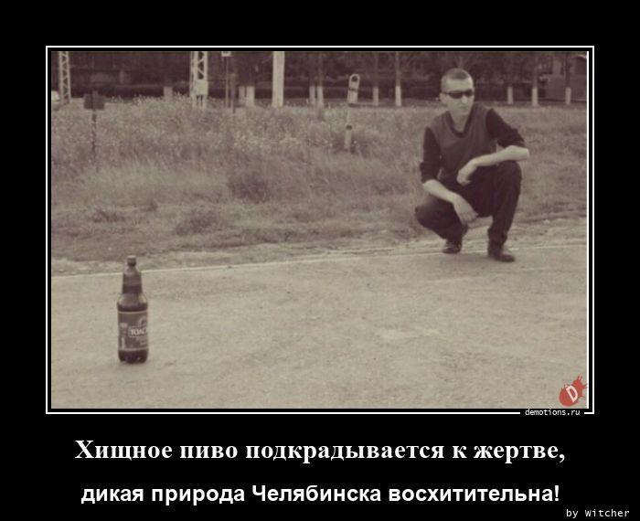 Хищное пиво подкрадывается к жертве,