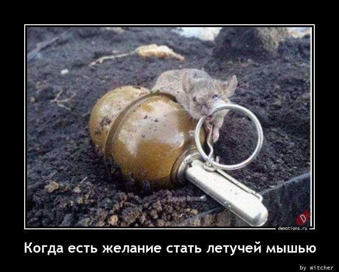 Когда есть желание стать летучей мышью