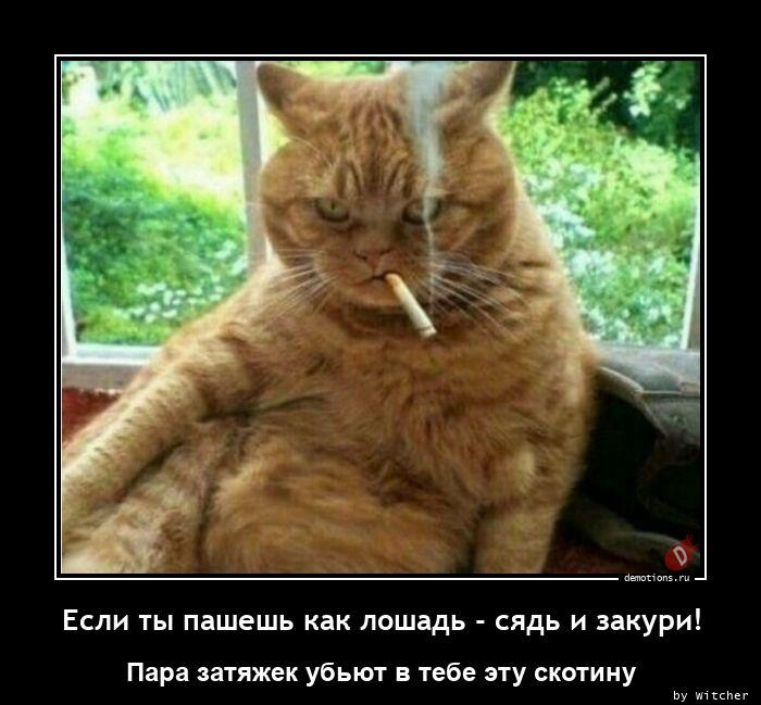 Если ты пашешь как лошадь - сядь и закури!