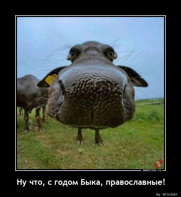 Ну что, с годом Быка, православные!