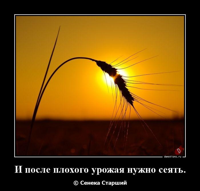 И после плохого урожая нужно сеять.
