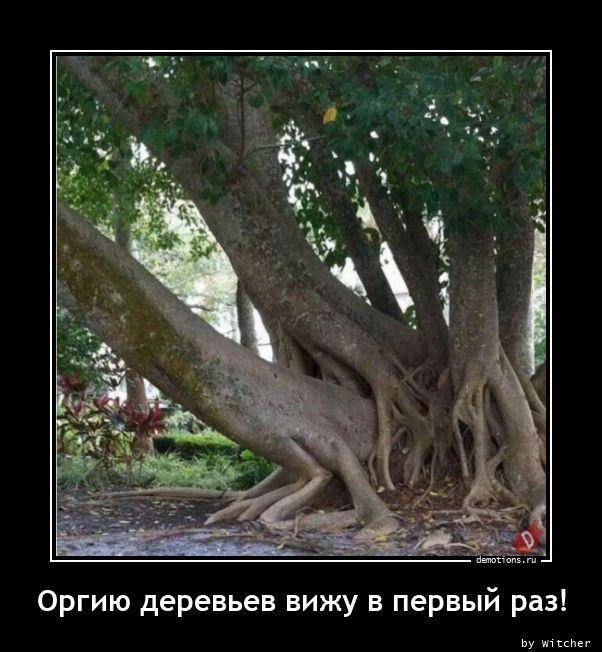 Оргию деревьев вижу в первый раз!