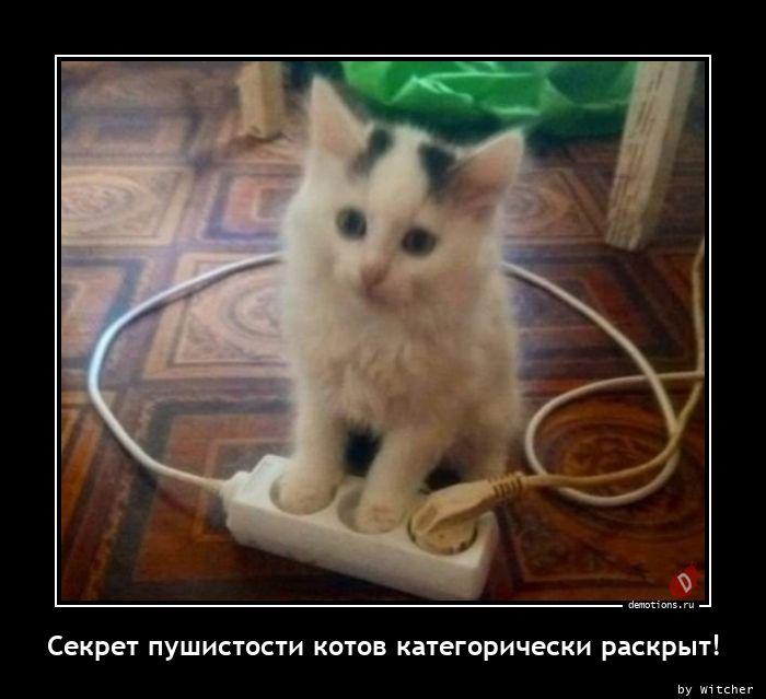 Секрет пушистости котов категорически раскрыт!