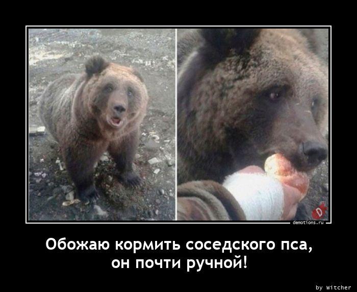 Обожаю кормить соседского пса, он почти ручной!