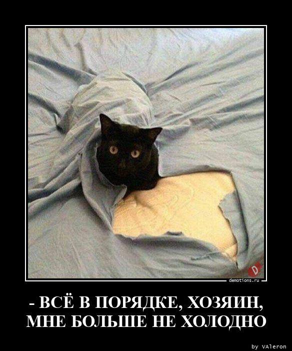 - ВСЁ В ПОРЯДКЕ, ХОЗЯИН, МНЕ БОЛЬШЕ НЕ ХОЛОДНО
