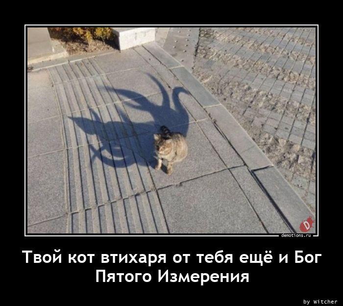 Твой кот втихаря от тебя ещё и Бог Пятого Измерения