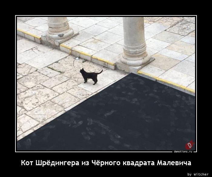 Кот Шрёдингера из Чёрного квадрата Малевича