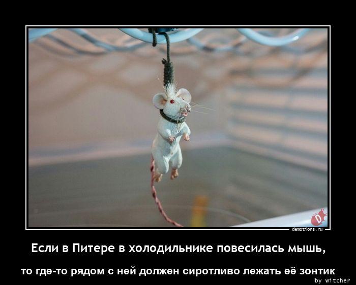 Если в Питере в холодильнике повесилась мышь,