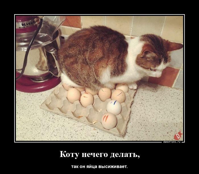 Коту нечего делать,