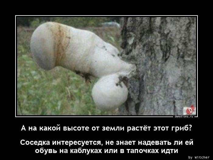 А на какой высоте от земли растёт этот гриб?