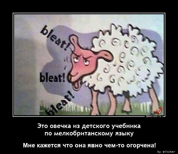 Это овечка из детского учебника по мелкобританскому языку