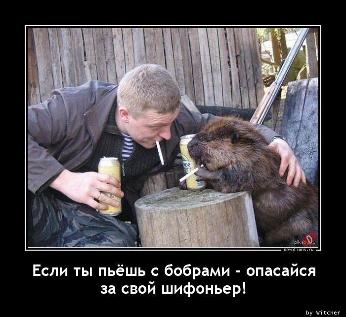 Если ты пьёшь с бобрами - опасайся за свой шифоньер!