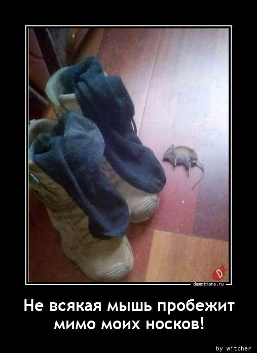 Не всякая мышь пробежит мимо моих носков!
