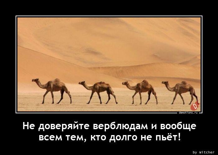 Не доверяйте верблюдам и вообще всем тем, кто долго не пьёт!