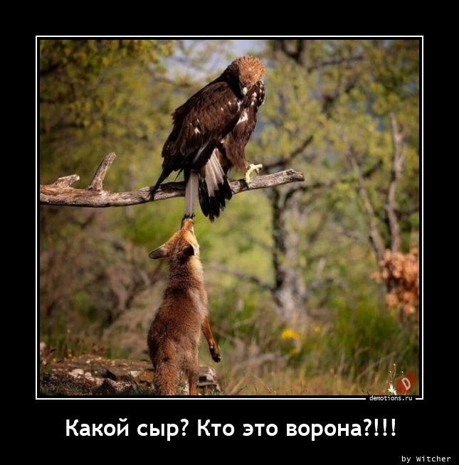 Какой сыр? Кто это ворона?!!!