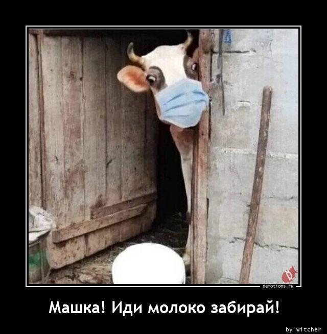 Машка! Иди молоко забирай!