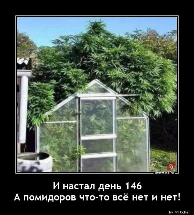 И настал день 146nА помидоров что-то всё нет и нет!