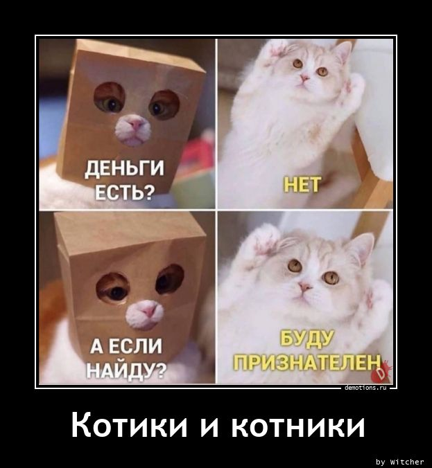 Котики и котники