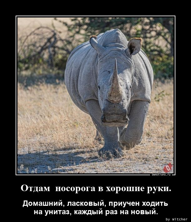 Отдам  носорога в хорошие руки.