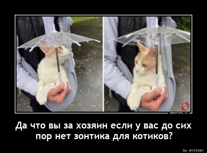 Да что вы за хозяин если у вас до сих пор нет зонтика для котиков?